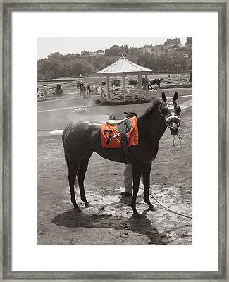 Lucky No. 7 Framed Print by Heather Weikel