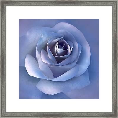 Luminous Lavender Rose Flower Framed Print by Jennie Marie Schell