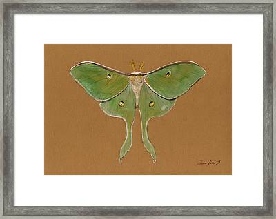 Luna Moth Framed Print by Juan Bosco