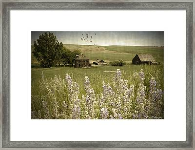 Lupine Homestead Framed Print by Melisa Meyers