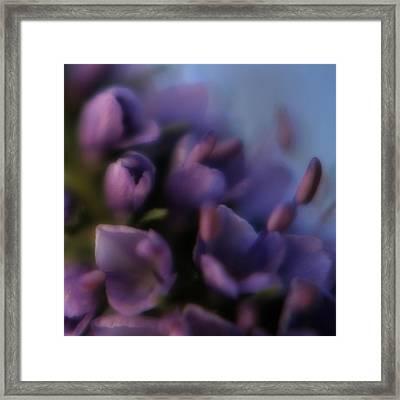 Luscious Lilac Framed Print by Bonnie Bruno