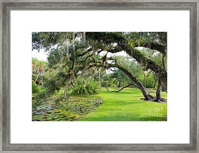 Lush Oak Arches Framed Print by Liesl Walsh