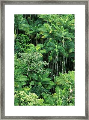 Lush Rainforest Framed Print by Ron Dahlquist - Printscapes