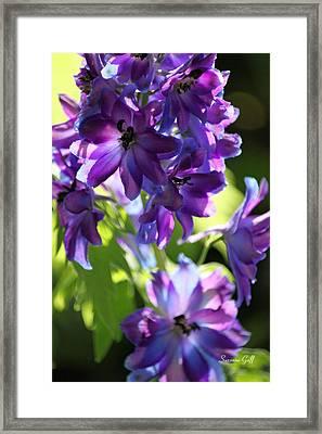 Lush Framed Print by Suzanne Gaff