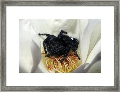 Lying In Your Bed Is The Cause Framed Print by Lorenzo Williams
