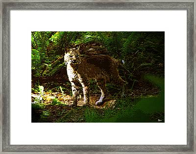 Lynx Rufus Framed Print by David Lee Thompson