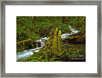 A Stream Of Tranquility Framed Print by Adam Jewell