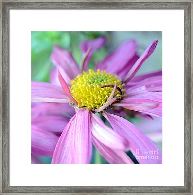 Ma Ooo Framed Print by SK Pfphotography