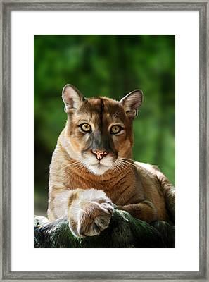 Mac Framed Print by Big Cat Rescue