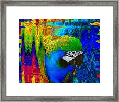 Macaw Madess Framed Print by Amanda Vouglas