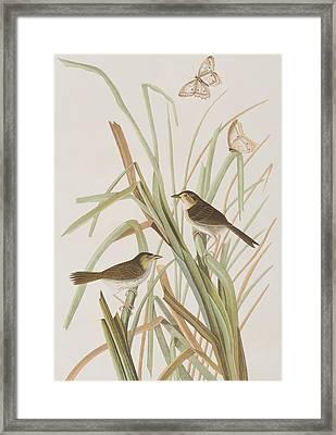 Macgillivray's Finch  Framed Print by John James Audubon