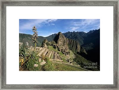 Machu Picchu And Bromeliad Framed Print by James Brunker