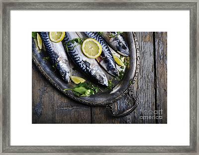 Mackerels On Silver Plate Framed Print by Jelena Jovanovic