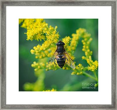 Macro 6 Framed Print by SK Pfphotography
