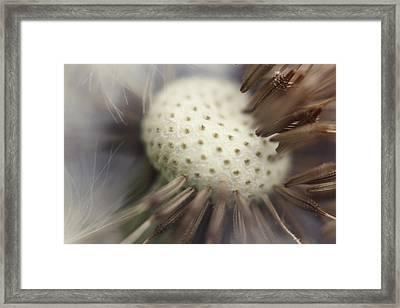 Pin Cushion Framed Print by Amy Tyler