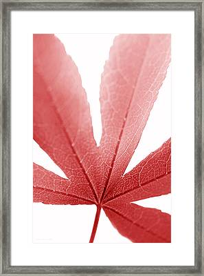 Macro Japanese Red Leaf Vertical Framed Print by Jennie Marie Schell