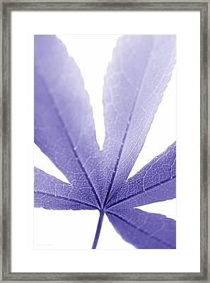 Macro Leaf Purple Vertical Framed Print by Jennie Marie Schell