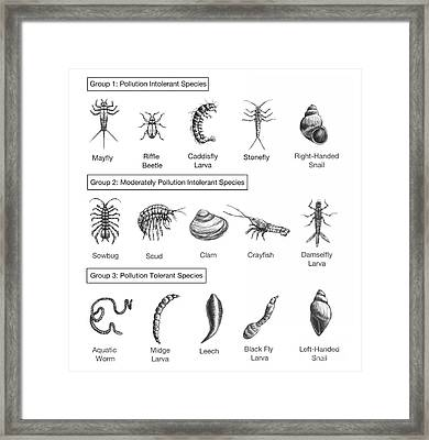 Macroinvertebrates Chart, Pollution Framed Print by Spencer Sutton