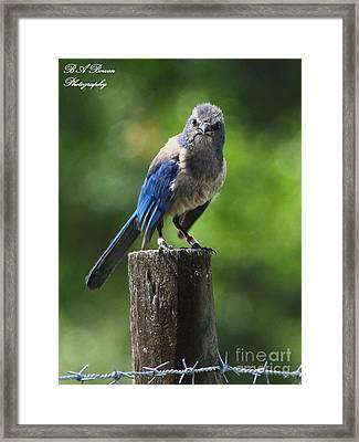 Mad Bird Framed Print by Barbara Bowen