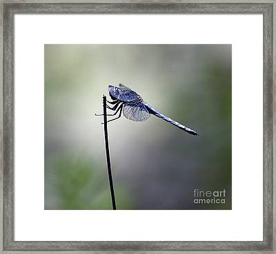 Made It To The Top Framed Print by Arnie Goldstein
