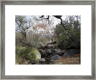 Madera Creek Framed Print by Feva Fotos