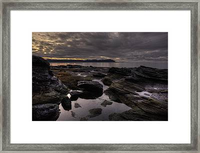 Madrona Evening 2 Framed Print by Randy Hall