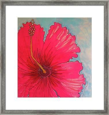 Magenta Hibiscus Framed Print by Kelly     ZumBerge