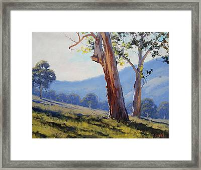 Magestic Gum Tumut Framed Print by Graham Gercken
