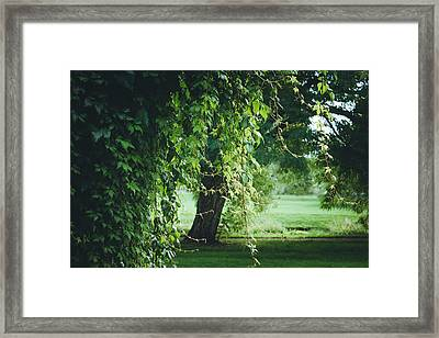 Magic Tree Framed Print by Cindy Grundsten