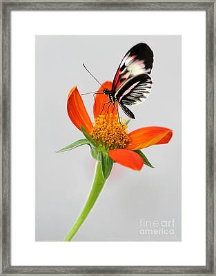 Magical Butterfly Framed Print by Sabrina L Ryan