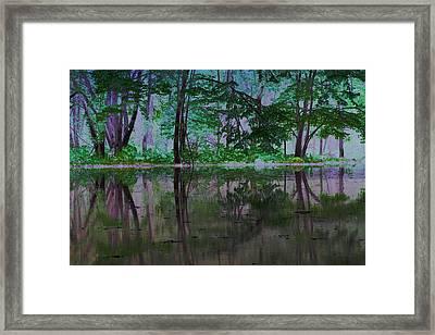 Magical Forest Framed Print by Karol Livote