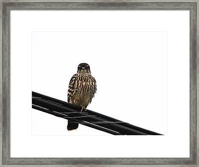 Magical Merlin Framed Print by Debbie Oppermann