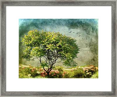Magical Mimosa Framed Print by Jessica Jenney