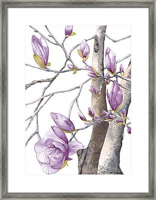 Magnolia Primo Framed Print by Autumn Leaves