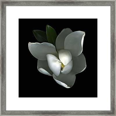 Magnolia Framed Print by Christian Slanec