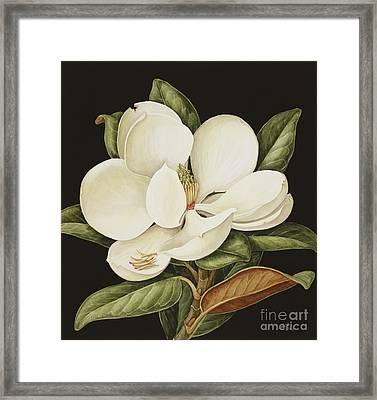 Magnolia Grandiflora Framed Print by Jenny Barron