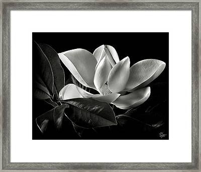 Magnolia In Black And White Framed Print by Endre Balogh