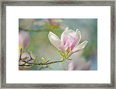 Cultivated Framed Print featuring the photograph Magnolia by Nailia Schwarz