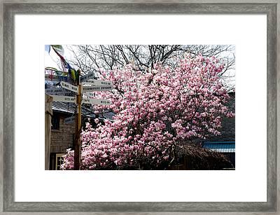 Magnolia Framed Print by Paul Wash