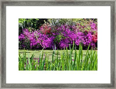 Magnolia Plantation Pond Framed Print by Drew Castelhano