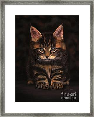 Maine Coon Kitty Framed Print by Sabine Lackner