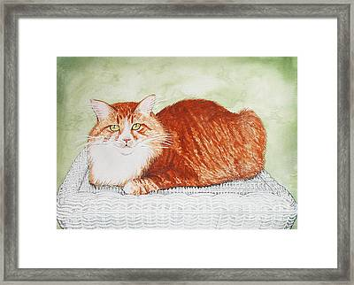 Maine Coon Portrait Framed Print by Laura Brightwood