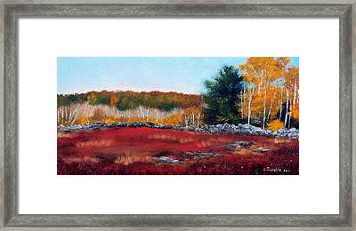 Maine Wild Blueberries Framed Print by Laura Tasheiko