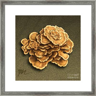 Maitake Mushroom Framed Print by Marshall Robinson