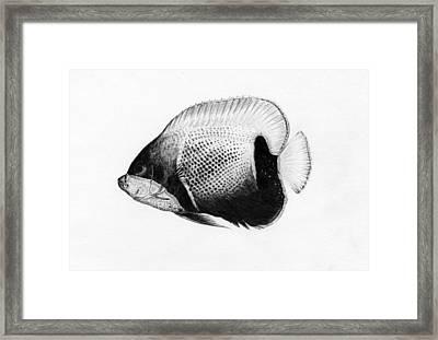 Majestic Angelfish Framed Print by Grygoriy Polishchuk