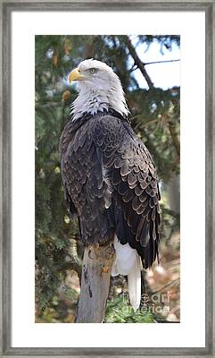 Majestic Liberty Framed Print by Chalet Roome-Rigdon