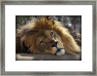 Majestic Love Framed Print by Linda Mishler