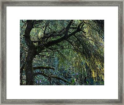 Majestic Weeping Willow Framed Print by Marion McCristall
