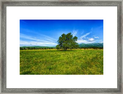 Majestic White Oak Tree In Cades Cove - 3 Framed Print by Frank J Benz