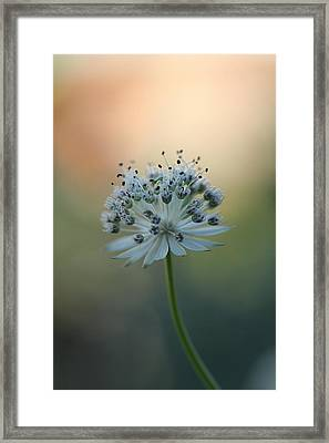 Make A Wish  Framed Print by Connie Handscomb